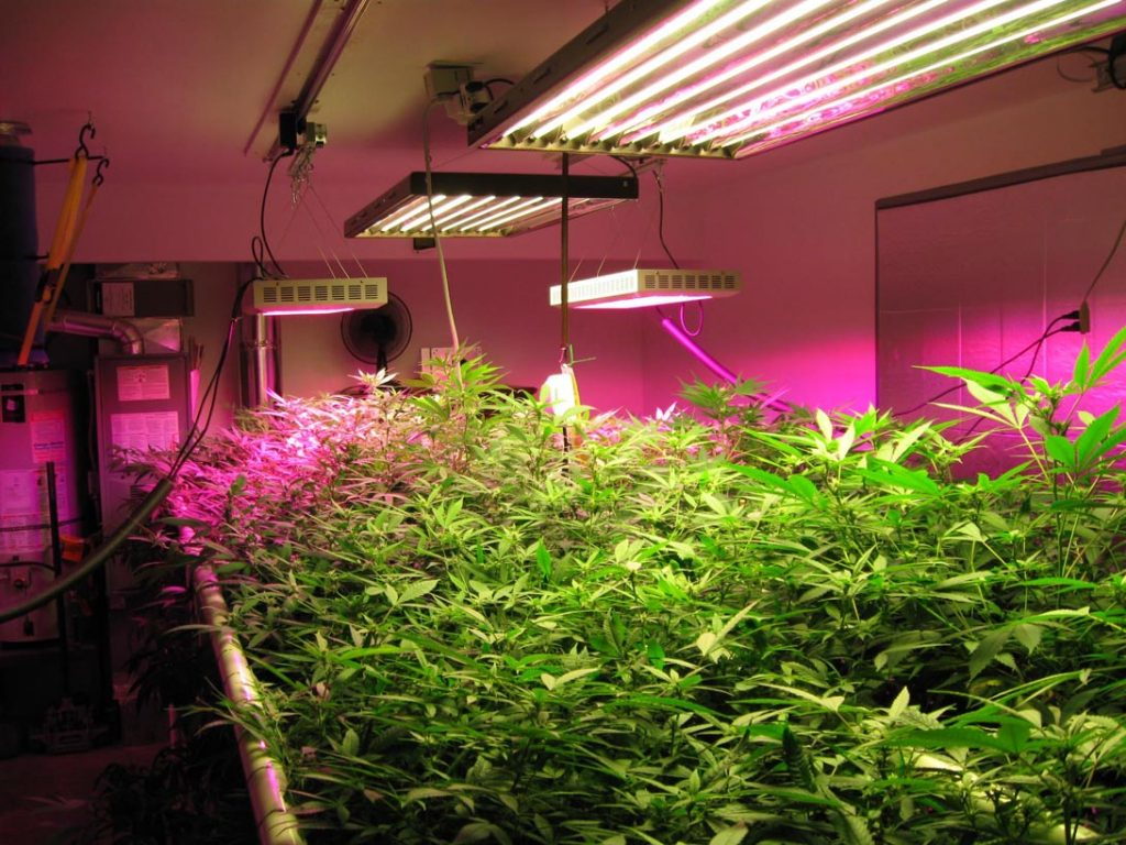 Best LED Grow Light Featured Image